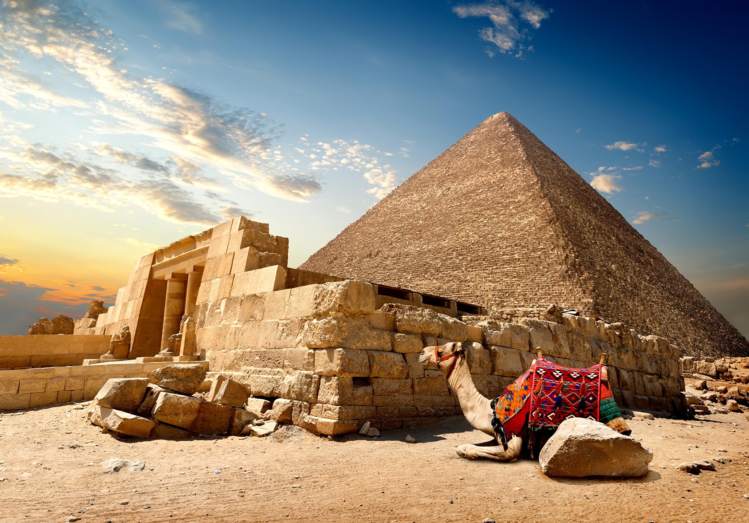 аппарата посмотреть картинки египетские чертой модов